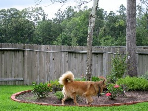 photo of the dog by the bushes